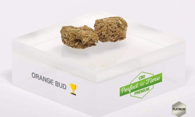 L'orange bud, une plante aux mille vertus contre le stress