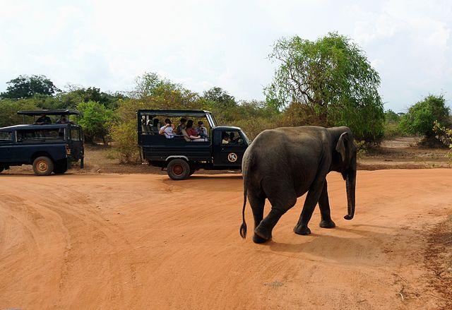Explorer le parc national de Yala, le parc le plus visité au Sri Lanka
