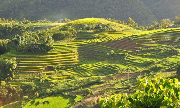 Séjour au Vietnam : visiter ses magnifiques rizières en terrasse